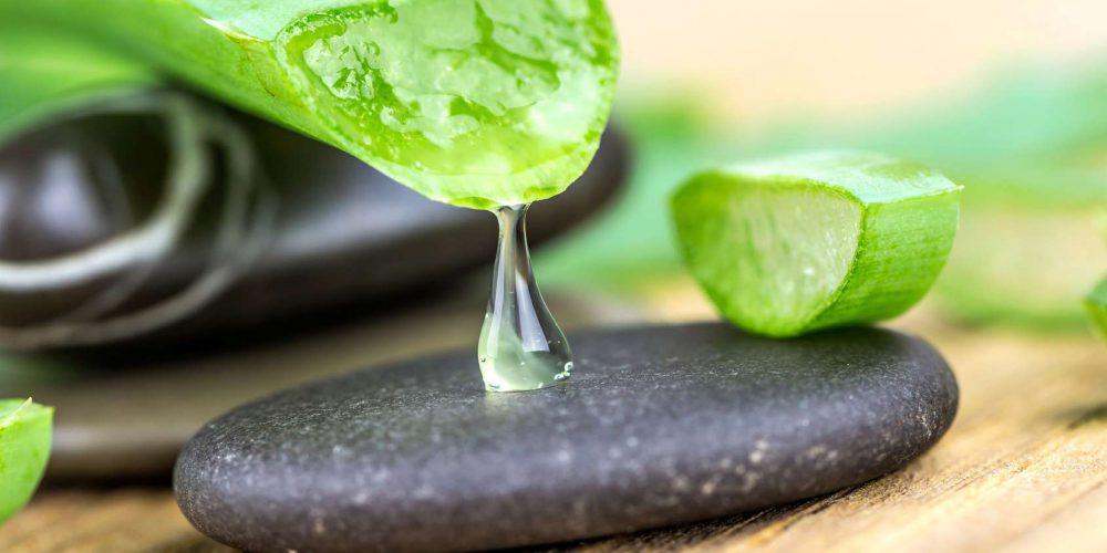 Aloe vera in der Kosmetik – wie wird sie verwendet?